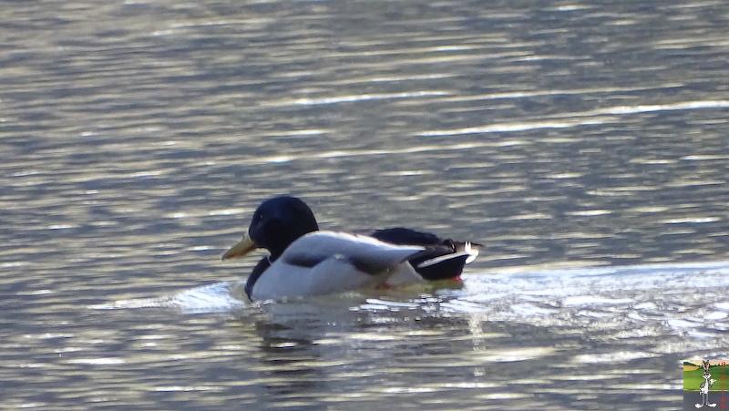[VD-CH] : 2020-02-15 : Balade sur les bords du Lac de Joux 2020-02-15_lac_joux_33