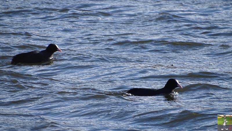[VD-CH] : 2020-02-15 : Balade sur les bords du Lac de Joux 2020-02-15_lac_joux_37