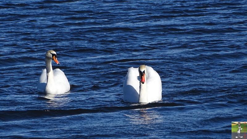 [VD-CH] : 2020-02-15 : Balade sur les bords du Lac de Joux 2020-02-15_lac_joux_38