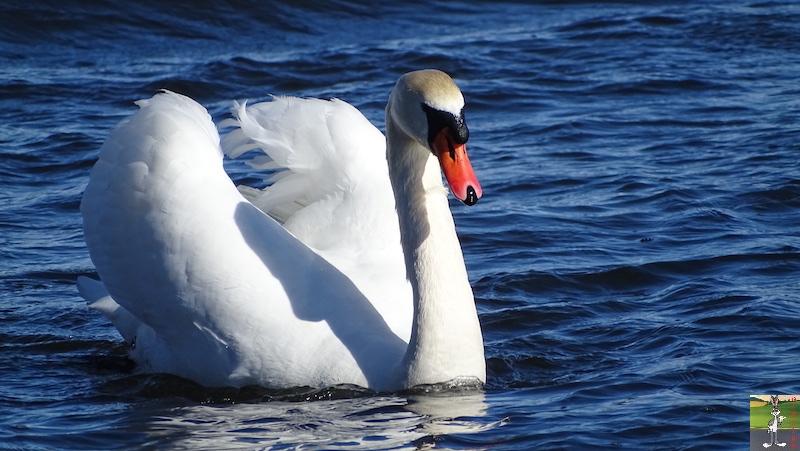 [VD-CH] : 2020-02-15 : Balade sur les bords du Lac de Joux 2020-02-15_lac_joux_39