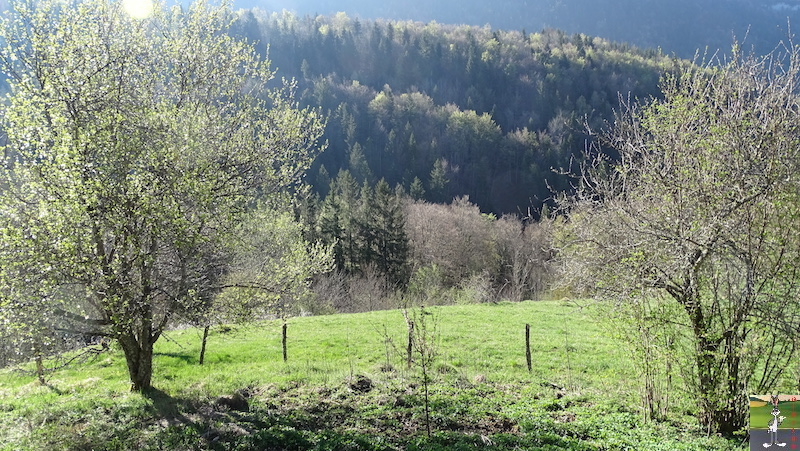 [39] : 2020-04-14 : La nature reprend vie à La Mainmorte 2020-04-14_nature_01