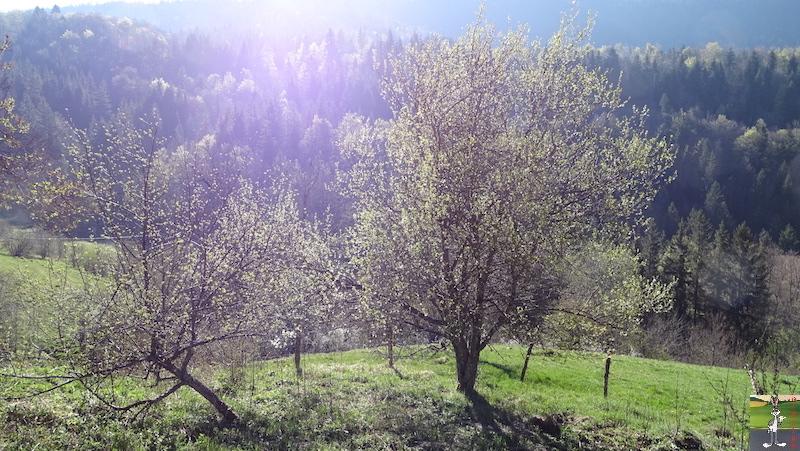 [39] : 2020-04-14 : La nature reprend vie à La Mainmorte 2020-04-14_nature_02