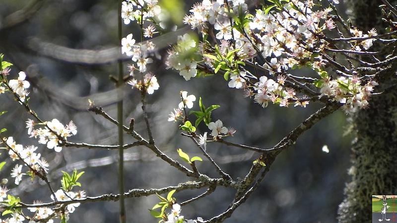 [39] : 2020-04-14 : La nature reprend vie à La Mainmorte 2020-04-14_nature_04