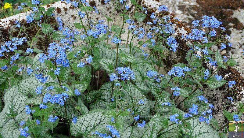 [39] : 2020-04-25 : Fleurs du matin à La Mainmorte 2020-04-25_fleurs_matin_09