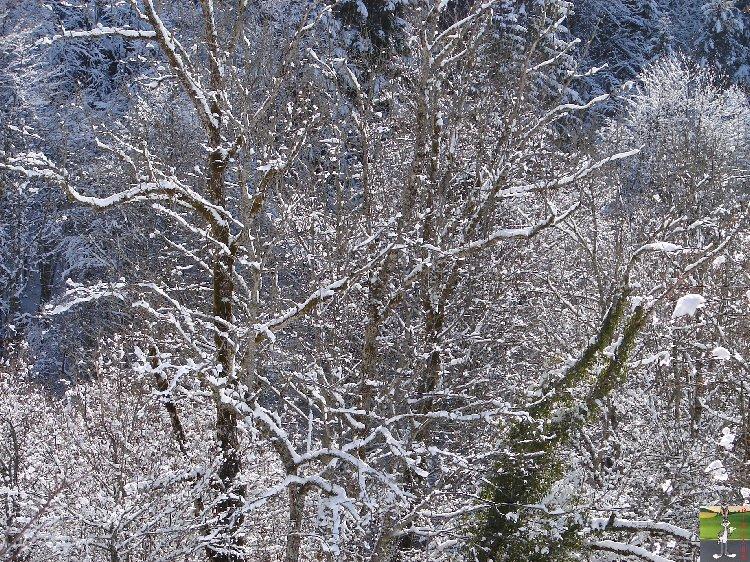 2010-02-21 : Neige à la Mainmorte (39) 2010-02-21_neige_02