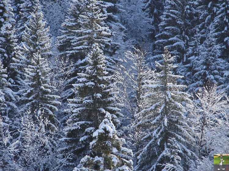 2010-02-21 : Neige à la Mainmorte (39) 2010-02-21_neige_03