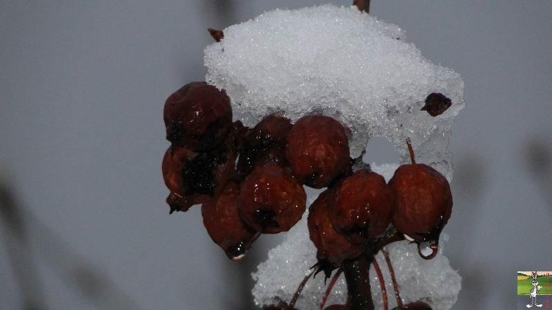 2011-02-20 : Retour de la neige à La Mainmorte (39) 2011-02-20_neige_04