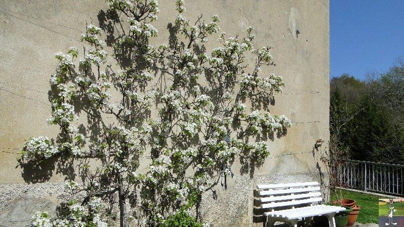 2011-04-10 : Poirier en fleur - La Mainmorte (39) 2011-04-10_poirier_02
