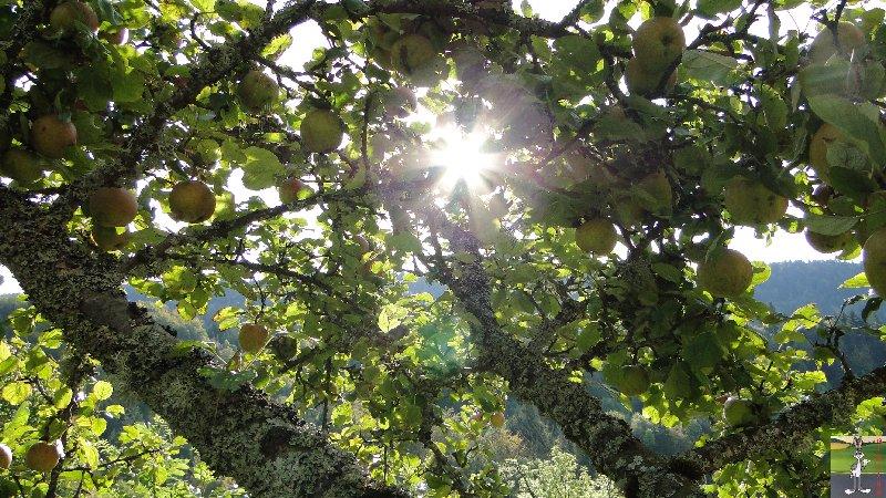2011-09-25 : Cueillette des pommes - La Mainmorte (39) 2011-09-25_pommes_02