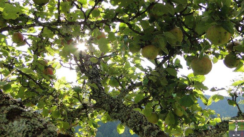 2011-09-25 : Cueillette des pommes - La Mainmorte (39) 2011-09-25_pommes_03