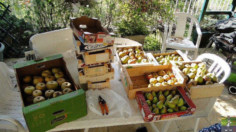 2011-09-25 : Cueillette des pommes - La Mainmorte (39) 2011-09-25_pommes_04