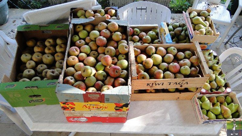 2011-09-25 : Cueillette des pommes - La Mainmorte (39) 2011-10-01_pommes_01