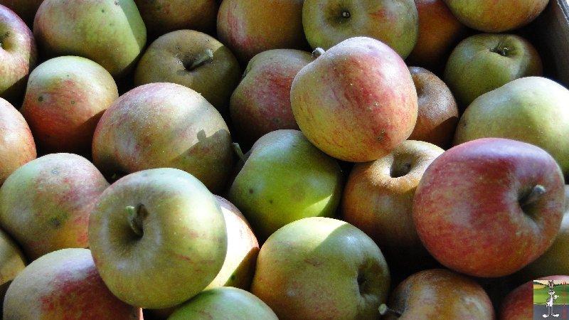 2011-09-25 : Cueillette des pommes - La Mainmorte (39) 2011-10-01_pommes_02
