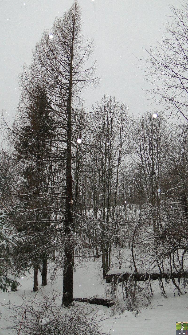 2011-12-24 : Neige et dégats à La Mainmorte (39)   2011-12-24_arbre_casse_01