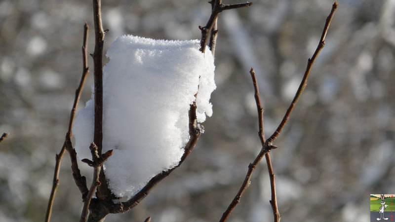 2012-12-01 : Neige à La Mainmorte (39) 2012-12-01_neige_07
