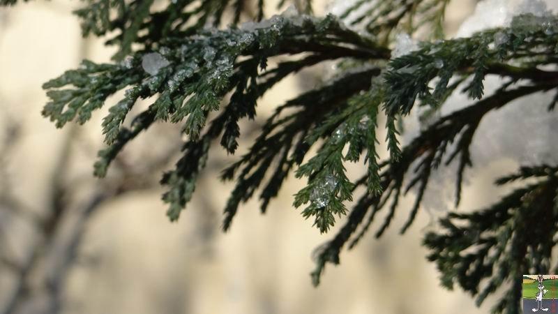 2012-12-01 : Neige à La Mainmorte (39) 2012-12-01_neige_08