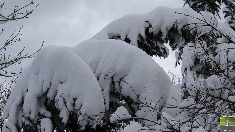 2013-02-08 : Neige à La Mainmorte (39) 2013-02-08_neige_05