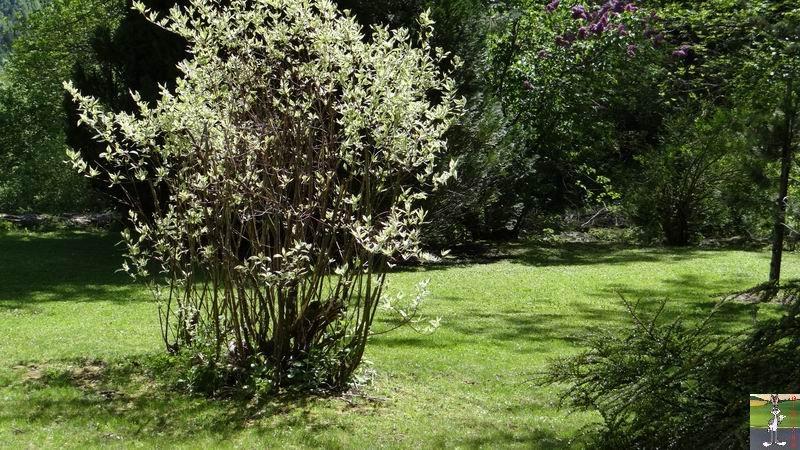 2014-05-24 : Pelouse fraîchement tondue à La Mainmorte (39) 2014-05-24_pelouse_03