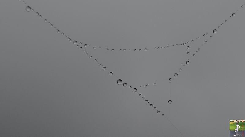2014-07-12 : Pluie et brouillard à La Mainmorte (39) 2014-07-12_brouillard_mouille_05