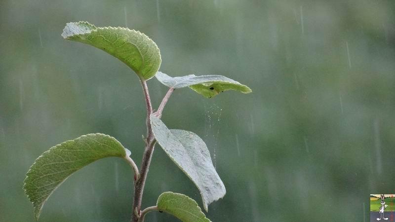 2014-07-26 : Gros déluge et orage à La Mainmorte (39) 2014-07-26_Pluie_02