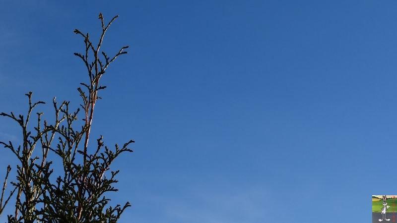 2014-12-21 : Ciel bleu et soleil à La Mainmorte (39) 2014-12-21_soleil_09