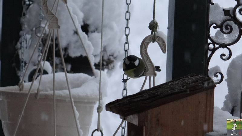 2015-01-17 : Neige à La Mainmorte (39) 2015-01-17_neige_03