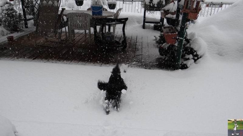 2015-02-21 : Retour de la neige à La Mainmorte (39) 2015-02-21_neige_09