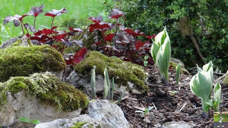 2015-05-09 : Les fleurs sont belles à La Mainmorte (39) 2015-05-09_fleurs_20
