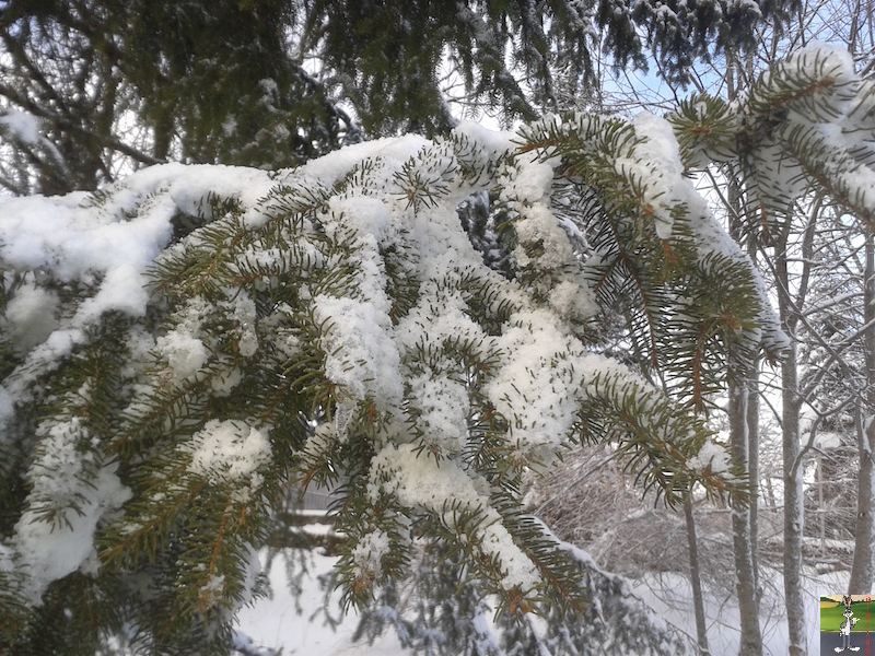 2016-01-15 : Neige à La Mainmorte (39) 2016-01-15_neige_07