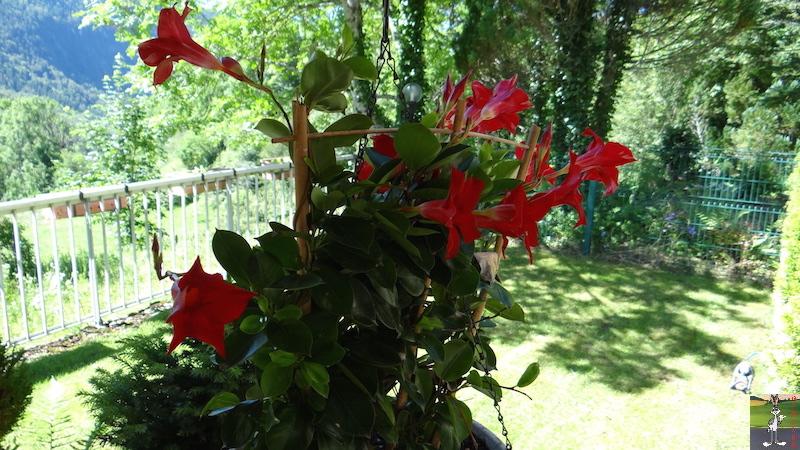 2016-07-17 : Ciel bleu, soleil et Fylou à La Mainmorte (39) 2016-07-17_ciel_bleu_soleil_fylou_10