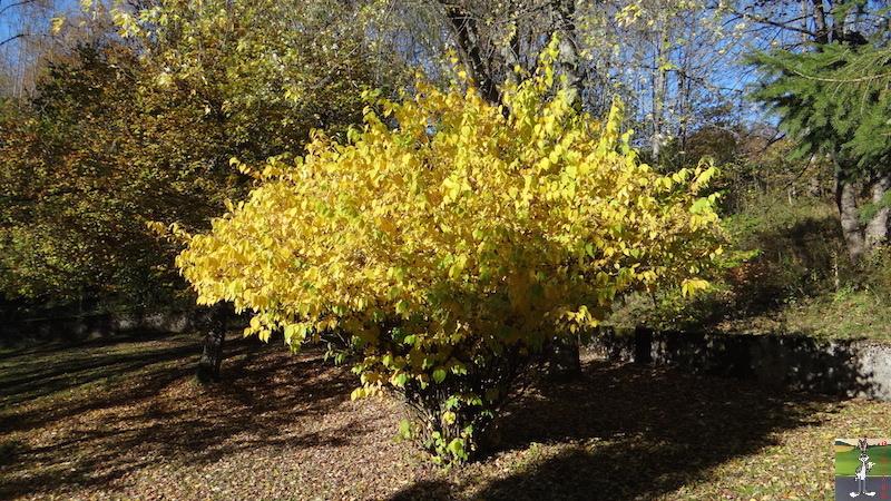 2016-10-29 : Jolies couleurs d'automne à La Mainmorte (39) 2016-10-29_automne_01