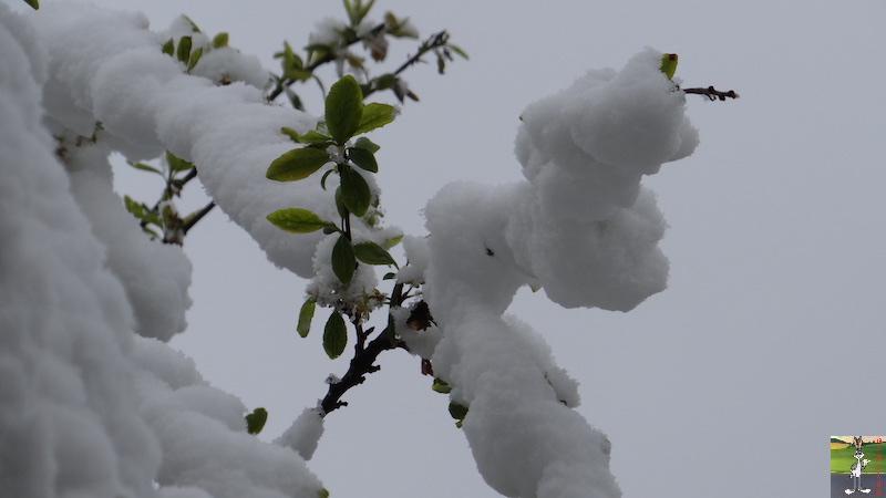 2017-04-28 : Re re re retour de la neige à La mainorte (39) 2017-04-28_neige_10