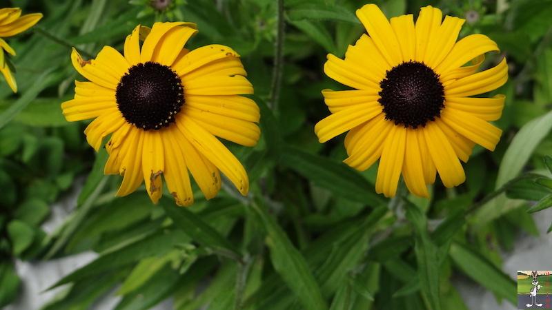 2017-08-07 : Fleurs à La Mainmorte (39) 2017-08-07_fleurs_11