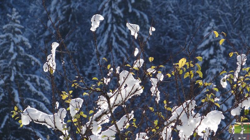 2017-11-14 : Neige et soleil à La Mainmorte (39) 2017-11-14_neige_15