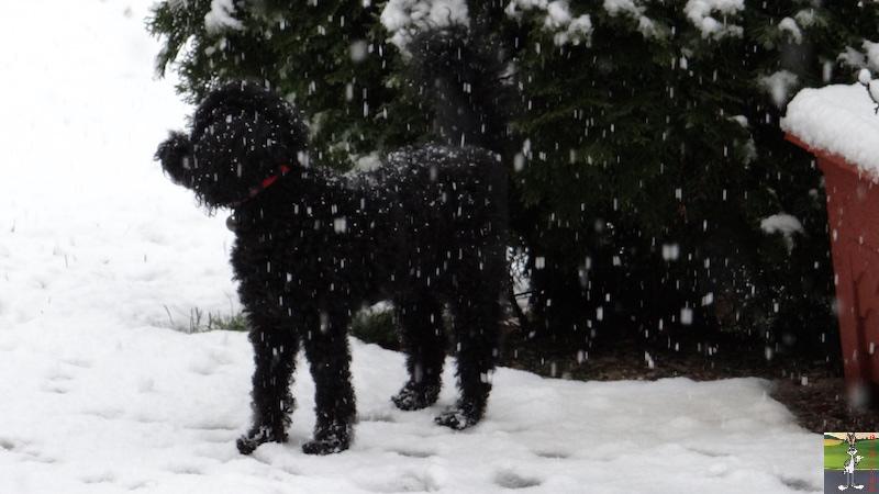 2017-11-25 : Nouvelle chute de neige à La Mainmorte (39) 2017-11-25_Neige_09