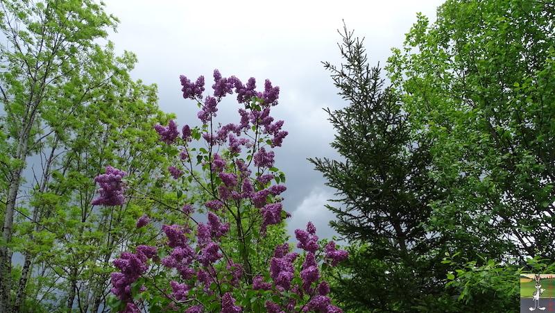 2018-05-19 : Balade à La Mainmorte (39) 2018-05-19_balade_03