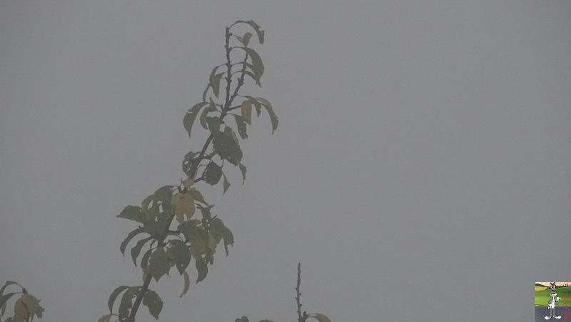 2018-10-07 : Brume et brouillard à La Mainmorte (39) 2018-10-07_moche_temps_02
