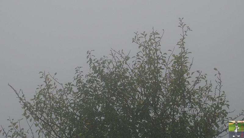 2018-10-07 : Brume et brouillard à La Mainmorte (39) 2018-10-07_moche_temps_03