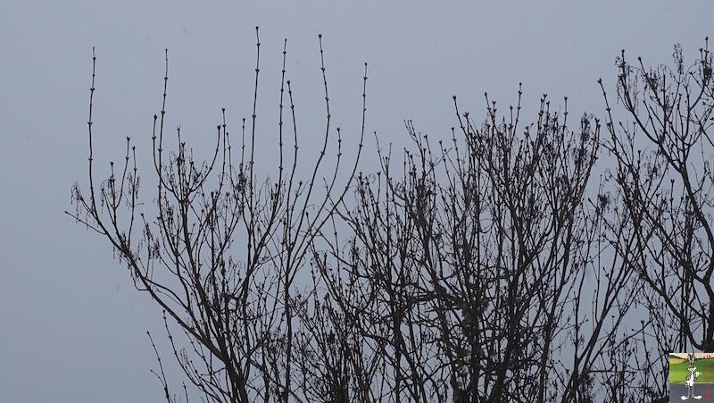 2019-01-26 : Changement de temps à La Mainmorte (39) 2019-01-26_neige_04