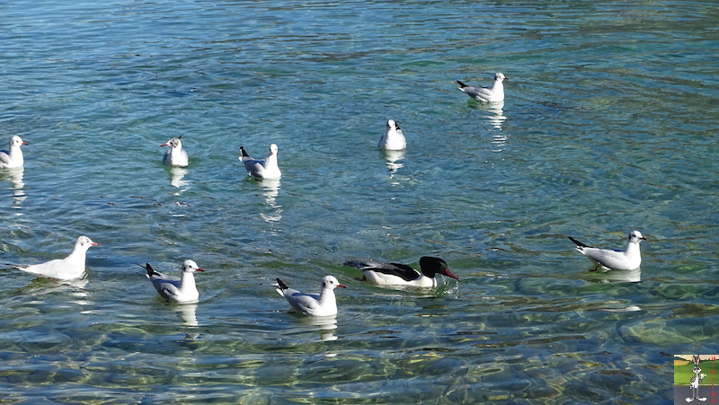 2019-02-16 : Annecy, son Lac et ses montagnes (74) 2019-02-16_annecy_27