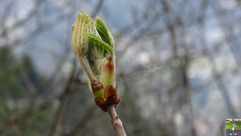 2019-04-14 : Balade entre Chaumont et Chaffardon (39) 2019-04-14_balade_06