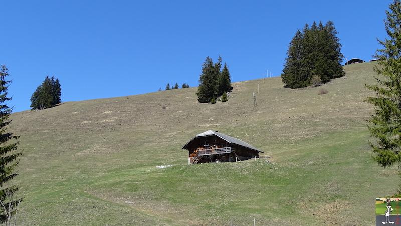 2019-04-20 : Balade en Suisse dans le Canton de Bern (BE, CH) 2019-04-20_suisse_11