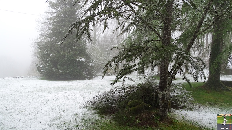 2019-04-28 : Et rebelotte, retour de la neige à La Mainmorte (39) 2019-04-28_neige_01
