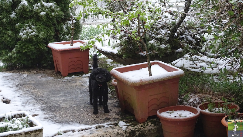2019-04-28 : Et rebelotte, retour de la neige à La Mainmorte (39) 2019-04-28_neige_06