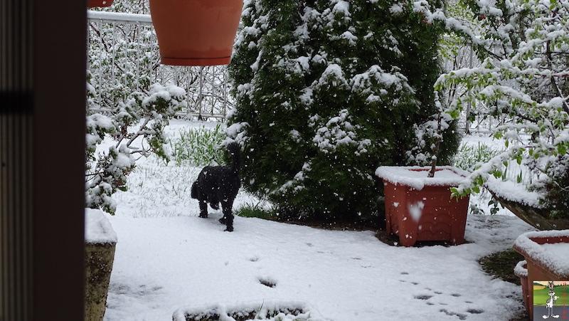 2019-04-28 : Et rebelotte, retour de la neige à La Mainmorte (39) 2019-04-28_neige_12