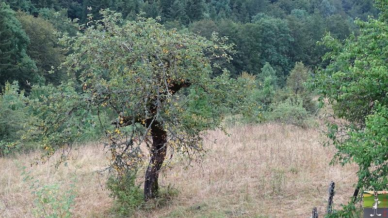 2019-07-28 : Grisaille et pluie à La Mainmorte (39) 2019-07-28_grisaille_04
