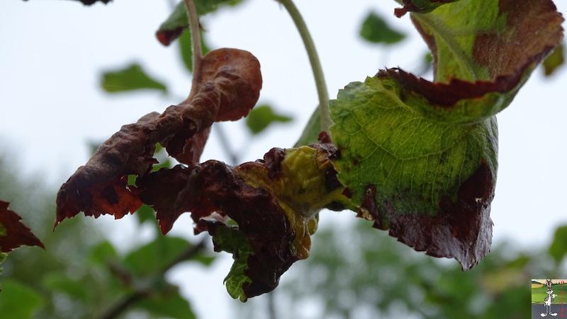 2019-07-28 : Grisaille et pluie à La Mainmorte (39) 2019-07-28_grisaille_07