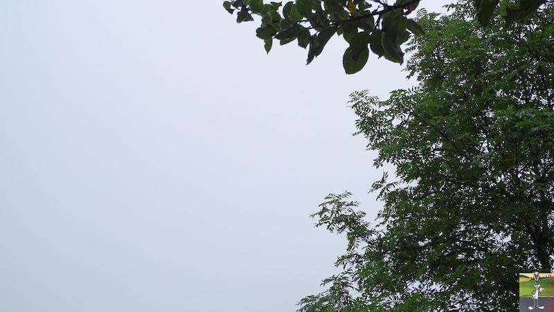 2019-07-28 : Grisaille et pluie à La Mainmorte (39) 2019-07-28_grisaille_12