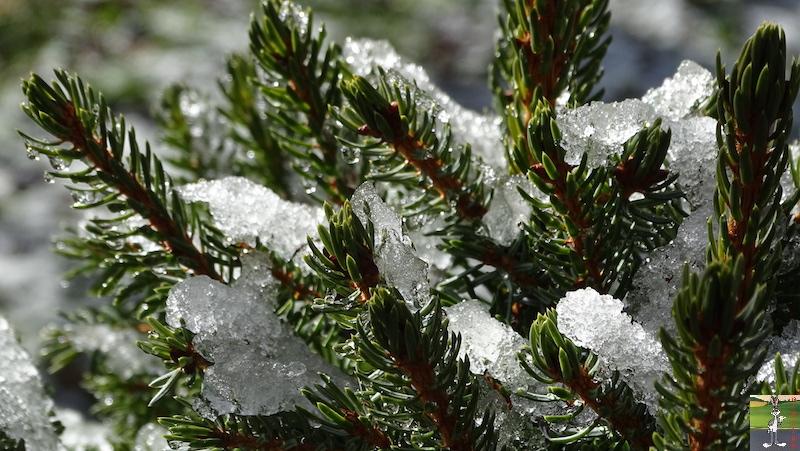 [39] - 2020-01-18 : Petit voile blanc et soleil à La Mainmorte 2020-01-18_neige_soleil_02