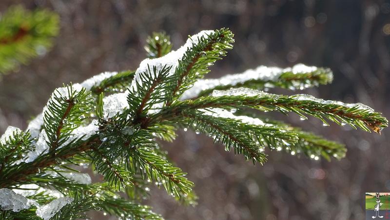 [39] - 2020-01-18 : Petit voile blanc et soleil à La Mainmorte 2020-01-18_neige_soleil_04